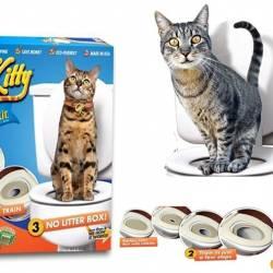 CitiKitty обучение за котка